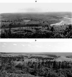 tundra-trees.jpg